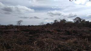 Berdasarkan data  laporan yang  diterima dari  Badan Penaggulangan  Bencana Aceh , terkait  kejadian Kebakaran Lahan sejak hari Rabu, 03 Juni 2020 pukul 16.00 WIB di kawasan gampong  Peunaga Cut, tepatnya di KM 3 Jalan PT. Mifa Bersaudara Kecamatan, Mereubodengan posisi  Titik Koordinat: N.4'8'13'487'' - E.96⁰12'54,715