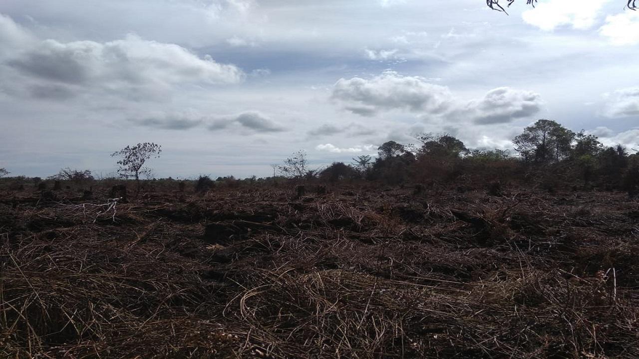 "Berdasarkan data laporan yang diterima dari Badan Penaggulangan Bencana Aceh , terkait kejadian Kebakaran Lahan sejak hari Rabu, 03 Juni 2020 pukul 16.00 WIB di kawasan gampong Peunaga Cut, tepatnya di KM 3 Jalan PT. Mifa Bersaudara Kecamatan, Mereubodengan posisi Titik Koordinat : N.4'8'13'487'' - E.96⁰12'54,715""."