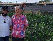 Zamzami, Tokoh Tani Sawit  Aceh Barat yang Dapat Gamal Award 2020